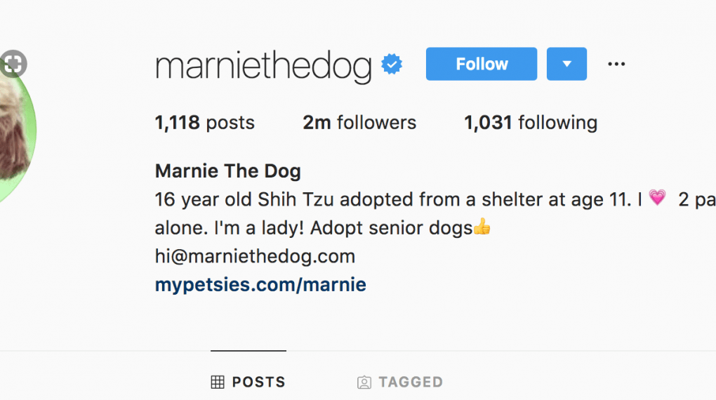 marinethedog instagram channel to make money online example