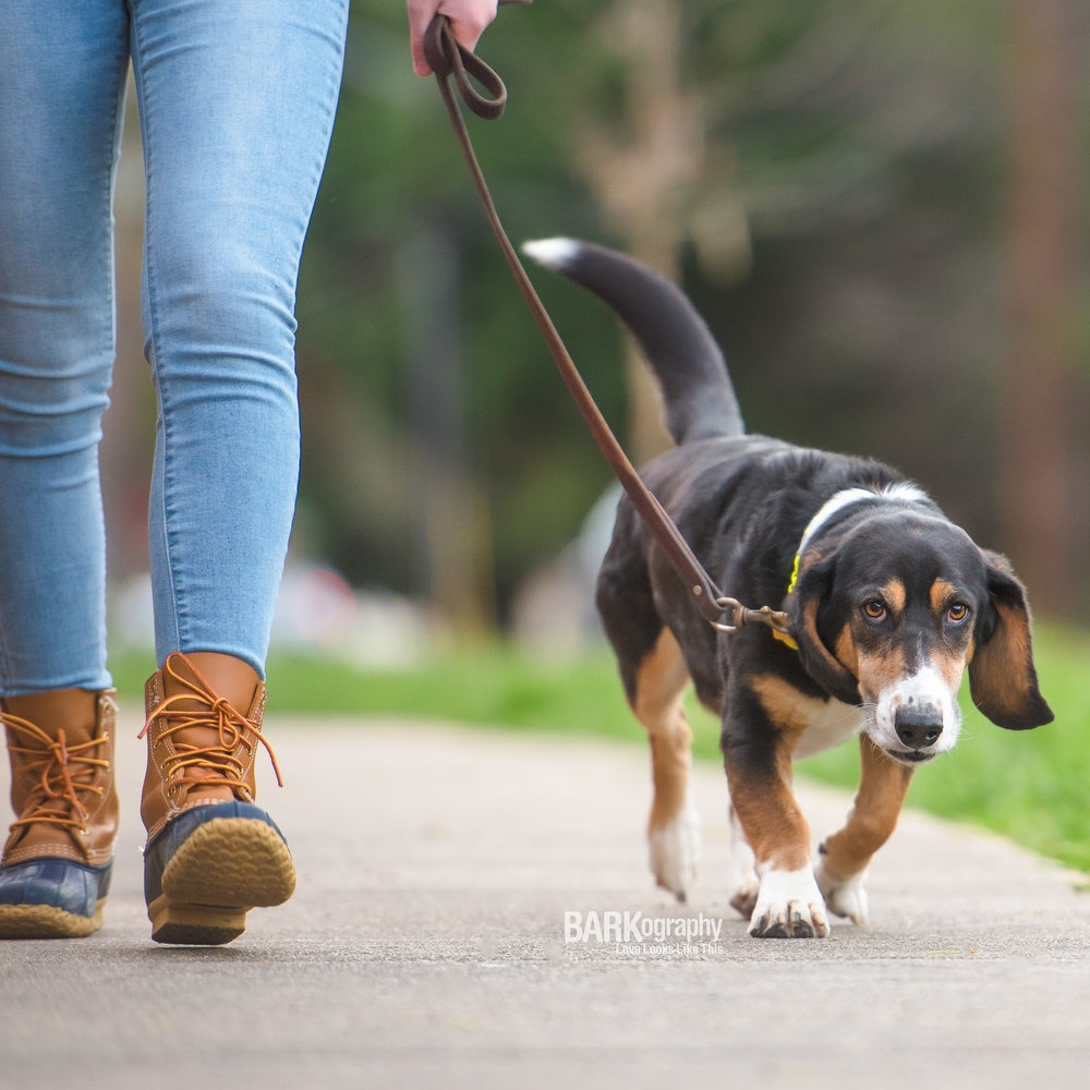 dog walking business for fast cash